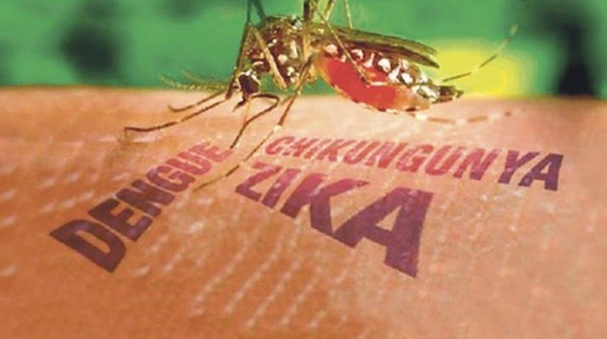 Dengue, Zika y Chikungunya